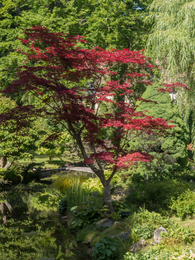 Courances has a beautiful Japanese garden. My Dad taught me a little about pruning; I think this Japanese Maple is the most beautifully pruned tree I've ever seen.